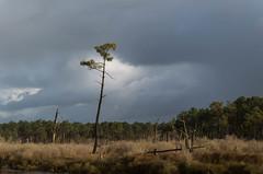 Pin maritime et ciel de pluie (bertrandguimberteau) Tags: nuage bassindarcachon préssalés arès