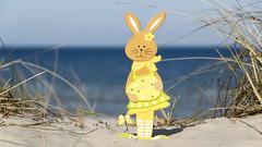Coloful wooden easter bunny on the beach (piropiro3) Tags: sea beach strand easter meer dune ostern easterbunny dne usedom osterhase karlshagen