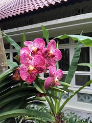 Img507163nx2 (veryamateurish) Tags: singapore shangrilahotel iphone6