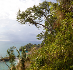 Tree above Playa Escondido, Manuel Antonio National Park, Costa Rica (maxunterwegs) Tags: panorama costarica stitch pano manuelantonionationalpark puntarenas stitched manuelantonio quepos parquenacionalmanuelantonio vertorama microsoftice nationalparkmanuelantonio