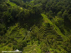 Tegalalang rice terraces - Bali-2016-1 (Christian Loader) Tags: bali field indonesia rice terrace aerial system unesco worldheritagesite agriculture irrigation ubud paddyfield riceterrace drone phantom3 tegalalang aerialimage subak tegallalang scubazoo christianloader tegalalangriceterrace scubazooimages djiphantom3professional