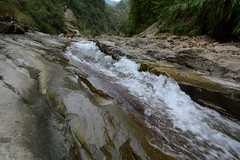 Heading Back Downstream 1 (Bob Hawley) Tags: pets mountains dogs nature water forest outdoors asia hiking taiwan streams nikon1755f28 yunlincounty nikond7100 taiwantugou qingshuiriver