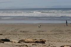 All Photos-9271 (jlh_lunasea) Tags: ocean dog beach driftwood manzanita