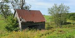 Le cabanon. (donaldpoirier93@yahoo.fr) Tags: tole paysage verdure cabane rouille cabanon tôle bardeau