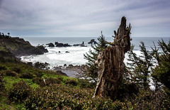 Ecola Point (Jonathan Miske) Tags: ocean usa seascape tree water oregon canon landscape coast spring rocks day unitedstates cloudy hiking pacificocean stump pacificnorthwest oregoncoast cannonbeach ecolastatepark ecolapoint canonef24mmf28 canon6d canoneos6d