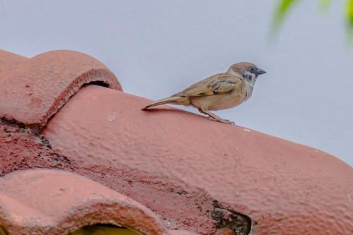 Birds around The house