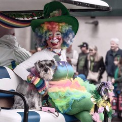 St. Patrick's Day Parade 2016 - 16 (rmc sutton) Tags: blackandwhite bw dog monochrome nikon sandiego clown series clowns stpatricksday monopod dogsandtheirowners