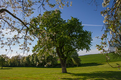 Spring outside (Frank Nitty) Tags: trees canon eos austria is sterreich spring 7d alm mm usm blooms efs baum obersterreich frhling blten 13556 innviertel 1585 canoneos7d mauerkirchen canonefs1585mm13556isusm byfranknitty franknitty 2016franknittyphotographics 2016byfranknitty