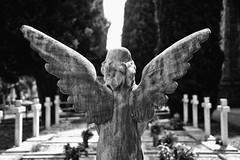 cimitero civico di Bergamo (Riboli Alessandro) Tags: white black statue angel di angelo bergamo monumenti bianconero cimitery cimitero civico preghiera piet