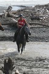 IMG_EOS 7D Mark II201604030563 (David F-I) Tags: horse equestrian horseback horseriding trailriding trailride ctr tehapua watrc wellingtonareatrailridingclub competitivetrailriding sporthorse equestriansport competitivetrailride april2016 tehapua2016 tehapuaapril2016 watrctehapuaapril2016
