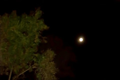 moonlight with trees ed (pelserk) Tags: moon tree mystery night dark outdoors moody nobody scene illuminated spooky silence midnight backgrounds moonlight glowing tranquil aura individuality absence