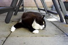 Tussi out in the patio... (vanstaffs) Tags: tux tutu ttussituzztututufsitutsituxedogirl