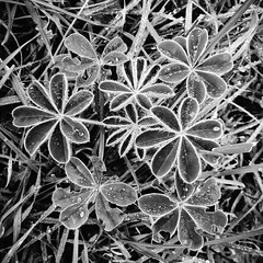 nature after dark. (Michail L.) Tags: morning blackandwhite bw copyright nature dew android timeless copyrighted macedonian huawei makedonia blanconero  macedoniagreece michaillazarou