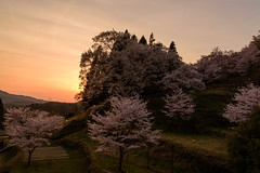 40Butsuryuji Temple (anglo10) Tags: sunset japan cherry temple