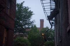 Weird Hanging Situation (MikeSpeaks) Tags: city urban washingtondc fireescape jupiter350mmf15