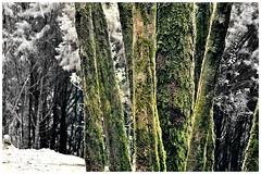 Random clicks (acharya_mr) Tags: trees india abstract mountains tamilnadu ooty southindia nilgris doddabetta