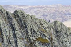 Scrambling Sharp Edge 2 (Nick Landells) Tags: lakedistrict ridge saddleback scrambling fellwalking blencathra sharpedge