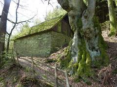 Backes II (rosiisphording) Tags: deutschland outdoor alt nrw grn landschaft baum frhling backhaus attendorn sauerland backes biggesee bremge