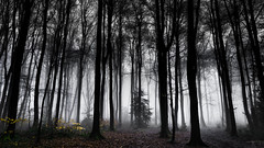 White Noise (goral126p) Tags: uk morning trees england white mist tree nature lines fog forest landscape outdoors spring mood outdoor atmosphere naturallight gloucestershire dew moment hazy forestfloor atmospheric afterrain a6000 sel18200
