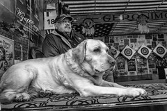 I don't want to be here... (John Bastoen) Tags: street dog streetphotography fair hond kermis foor straatfotografie