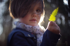 (Shannon Alexander Photography) Tags: fern nature forest backlighting childportrait fineartphotographer freelensing vermontphotographer shannonalexanderphotography
