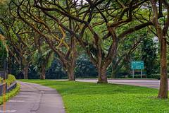 Singapore (Edi Bhler) Tags: plant tree grass pflanze gras baum baumstamm strassenschild 28300mmf3556 nikond800