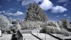 Garden IR2 (Yasmine Hens) Tags: ir europa flickr belgium ngc infrared namur hens yasmine wallonie 720nm infrarouge nikond90 iamflickr flickrunitedaward hensyasmine