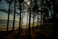 Curracloe Beach (Adrian Costigan.) Tags: trees ireland irish sun sunlight beach nature canon woodland eos sand woods scenery scenic wexford curracloe