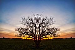 SymmeTree (Matt Molloy) Tags: sunset sky ontario canada tree field landscape photography timelapse bath branches tribal symmetry lovelife photostack mattmolloy digitallymirrored timestack