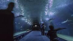 L'Oceanogrfic (ponzoosa) Tags: ocean sea fish valencia shark mar tunnel aquarius acuario tnel oceanografic ocano tiburn