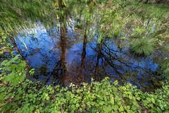 like a gate into another world (jan.scho) Tags: see himmel gras grn blau moor wald bltter spiegelung baum