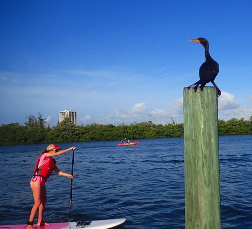 12_29_15  pm paddleboard tour Sarasota FL 07
