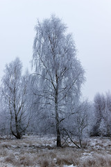 White Tree - Soft Rime and Mist (Deep Space Ocean) Tags: ocean trees winter sea white mist snow cold tree ice soft frost rime leaning