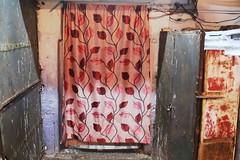 Sighted in Delhi—The Beautiful Fall Leaves of New York (Mayank Austen Soofi) Tags: new york fall beautiful leaves delhi curtain walla sighted purdah delhi—the