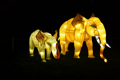 Elephant Lanterns (pokoroto) Tags: autumn canada calgary night zoo october alberta 10 2015     kannazuki   themonthwhentherearenogods 27