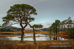 Tulla Winter (2) (Shuggie!!) Tags: trees winter snow mountains water pine forest reflections landscape scotland highlands williams shoreline hills karl grasses hdr lochtulla zenfolio karlwilliams