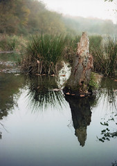 img019 (Mattia_Cavazzana) Tags: color film water analog 35mm canon reflections kodak 200iso swamp ft colori riflessi analogphoto pellicola stagno colorplus