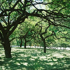 Will Change_1_ 007 (Kahori YAGI_Kahoring) Tags: park light shadow tree green 120 film grass zeiss square branch kodak jena medium pentacon portra p6 pentaconsix arax portra400 czj carlzeissjena biometar