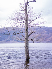 Stranded (marcritchie) Tags: sky lake mountains tree nature clouds outdoors scotland shadows heather country treetrunk loch lochlomond rowardennan visitscotland marcritchie