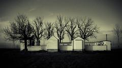 (trevis_lu) Tags: winter monochrome cemetery countryside photo blackwhite campagna inverno bianconero cimitero nikkor35mmf18 nikondf