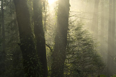 Morning Mist (gwendolyn.allsop) Tags:
