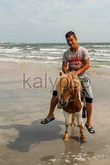 Portrait Of Young Boy Riding His Pony (kalypsoworldphotography) Tags: ocean morning travel blue boy sea summer portrait sky horse sunlight man motion black beach water beautiful smile youth neck season sand day adult action horizon small young wave sunny riding pony blonde brindle elegant activity breed halter horseback mane touristic constanta mamaia thicker equestrianism restive shorterlegs