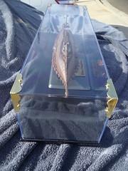 GEDC2171 (Darryl James - White Sheep) Tags: nautilus displaycase 16inch 09801 scottbrodeen everbilt mastertools brasscorner