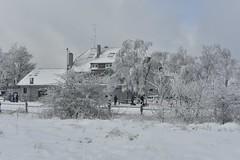L'arrire de l'auberge (Flikkersteph -4,000,000 views ,thank you!) Tags: trees winter snow belgium overcast freeze lighteffect hautesfagnes marshlands beautyofnature coldtemperature graycolors
