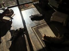Winter Morning Sun for the Cats 2 (sjrankin) Tags: california shadow sun sunlight animal northerncalifornia cat warm floor edited tigger nobuo yuba 5february2016