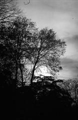 Mini serie / Melancola y Siluetas (Sentamashi) Tags: bw plants blancoynegro film nature 35mm dark landscape arbol poetry darkness atmosphere ambient nikonf3 siluetas grano ambiente contrastes polvo atmsfera pelcula potico romntico tenebrismo luznatural