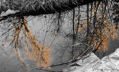 Golden Reflection (KWinters Photography Colorado) Tags: trees winter bw white black color reflection ice nature water yellow creek outdoors golden nikon colorado stream shown hintofcolor d5500 cmwdorange