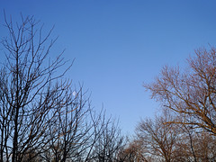Silver in Gold (Paul Henegan) Tags: trees sky moon goldenhour earlymorninglight waninggibbous