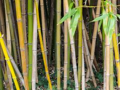 _C122587-web-8.jpg (laurenz.lanik) Tags: vienna bamboo botanicgarden bambus botanischergarten
