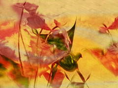 anthuriums in the wind. (Cleide@.) Tags: flowers brazil  art texture digital photo exotic plugins 2016 anthuriums ps6 artdigital sotn awardtree cleide netartii
